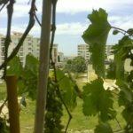 0260 Красивая квартира для отдыха в Баре Вид с террасы