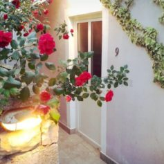"0223/9 Апартамент для двоих на вилле ""Сад цветов"""